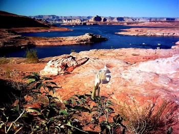 Things to do near Lake Powell