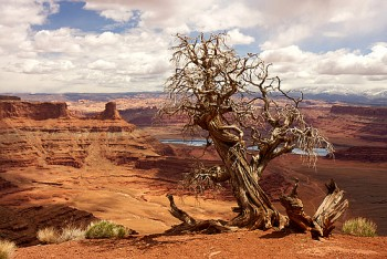 Hiking in the Canyonlands